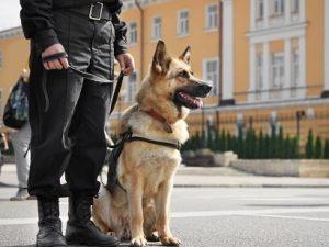 Maitre chien - société de sécurité